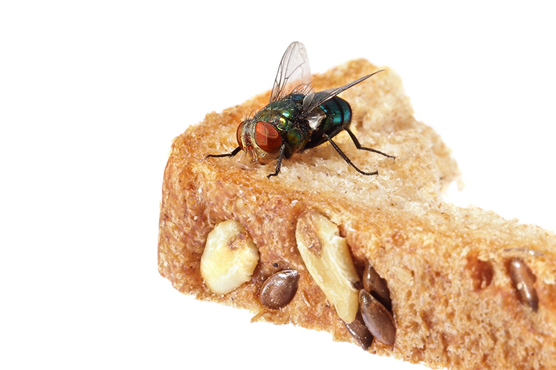 Fly Pest Control in Barnet Greater London